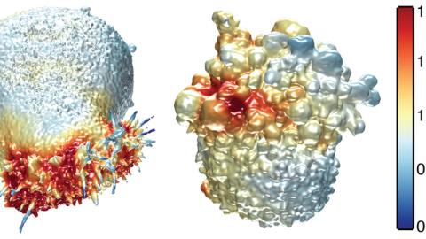 Un microscopio 3D desvela detalles de las células cancerosas