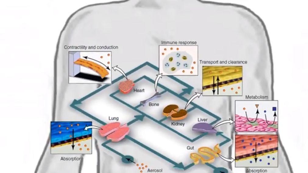 Crean órganos humanos en chip en Israel - Ingeniería Biomédica