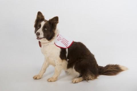 Perros que detectan el cáncer de próstata con su olfato