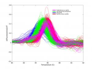 Típicas curvas de pérdida de fluorescencia adquiridas de un chip en el cual se incluyó el ADN de 5 tipos de bacteria conocidos. Cada color representa a un patógeno distinto. Crédito: Hannah Mack.