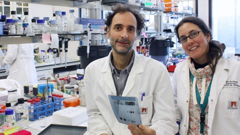 La activación de una proteína permitiría tratar la pérdida de memoria en casos de demencia